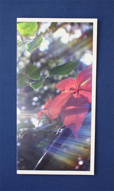 Motiv 3 - Blatt Format - Panorama Postkarten (21 x 10,5 cm) Versand inkl. Kuvert