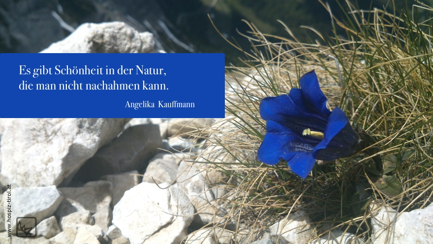 schönheit-natur-kauffmann