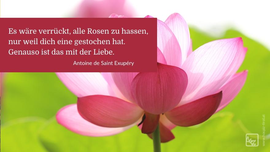 rosen-liebe-exupery