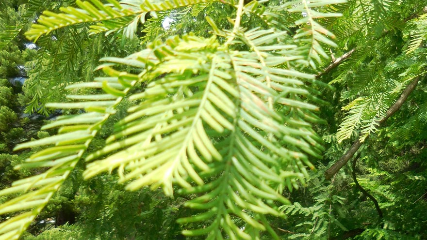 auftanken - grüne natur