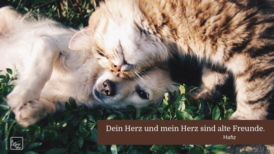 herzfreunde-hafiz