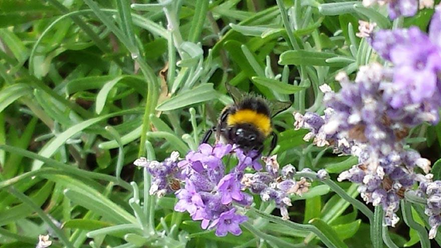 Auftanken - Biene2