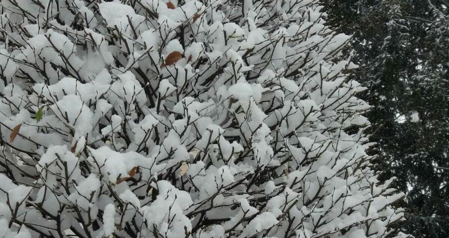 auftanken winterbaum