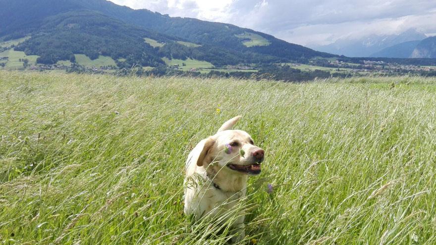 Gina in der Sommerwiese